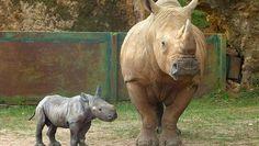 Rinoceronti  (45)