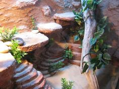 Show us your set ups Page 7 Reptile Forums Happy Terrariums Gecko, Terrariums Diy, Terrarium Reptile, Reptile Cage, Reptile Habitat, Reptile Enclosure, Gecko Vivarium, Reptile Decor, Reptile Room