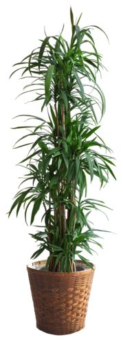 fejka artificial potted plant ikea lifelike. Black Bedroom Furniture Sets. Home Design Ideas