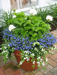 Geranium, lobelia and bacopa Container Herb Garden, Container Gardening Vegetables, Container Plants, Garden Pots, Evergreen Container, Succulent Containers, Container Design, Container Flowers, Garden Bed