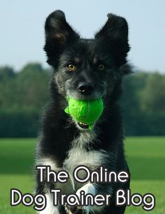Discover The Powerful Dog Training Secrets To Overcome 30+ Common Dog and Puppy Behavioral Issues With STEP-BY-STEP Instructions From One of The World's Most Skilled Dog Trainers! http://www.theonlinedogtrainer.gq/track/dogtrainer/source/campaign-ads