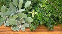 Kräuter pflanzen: Kräuter-Sorten