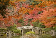 Sentō-gosho Garden, Kyoto. Best time to visit to see the fall foliage is around mid October-mid November