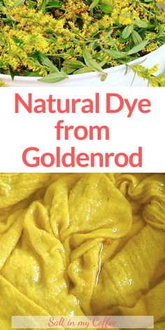 How to Make Natural Dye Using Goldenrod Dyeing with goldenrod is easy and fun, and it's one of my favorite dye plants to work with. Learn how to take goldenrod blossoms and use them to dye cotton, wool, and more. How To Tie Dye, How To Dye Fabric, How To Make, Dyeing Fabric, Dyeing Yarn, Natural Dye Fabric, Natural Dyeing, Tie Dye Tutorial, Make Natural