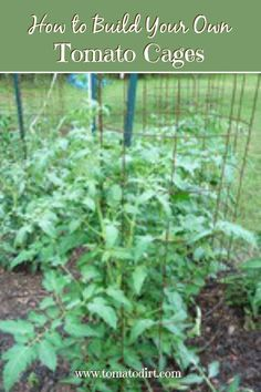to build tomato cages to support tomato plants How to build tomato cages with Tomato Dirt. Great tips for staking tomatoesHow to build tomato cages with Tomato Dirt. Great tips for staking tomatoes Growing Tomatoes Indoors, Growing Tomatoes From Seed, Growing Tomato Plants, Growing Tomatoes In Containers, Grow Tomatoes, Baby Tomatoes, Cherry Tomatoes, Dried Tomatoes, Gardens