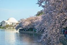 3/14/2012  Plentiful sun and 75 degrees. Cherry blossoms will be early this year, and the blossom watch is on.
