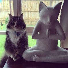 zen kitty :)
