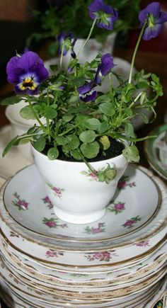 Flowers planted in tea cups - Hand made wedding - www.thevintagehire.com