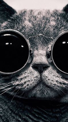 61 New Ideas wall paper iphone funny hipster Tumblr Face, Cats Tumblr, Crazy Wallpaper, Hd Wallpaper, Kitten Wallpaper, Funny Cat Faces, Funny Cats, Wallpapper Iphone, Beste Iphone Wallpaper