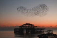 Brighton West Pier taken at sunset last November. The pier burned down a few years ago so only a skeleton is left. Starlings roost on it and give amazing aerobatic displays.