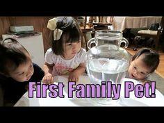 Our First Family Pet! - September 14, 2015 -  ItsJudysLife Vlogs