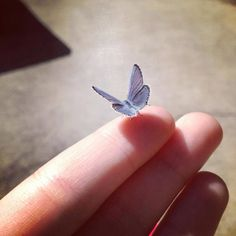 Baby Butterfly landed on a Special Person!!! Brooke!