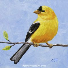 Goldfinch Mini Painting - WetCanvas