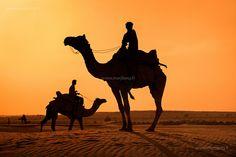Silhouettes, Thar desert by Marji Lang, via Flickr