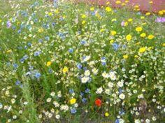 Bloemen mengsel 250 gram