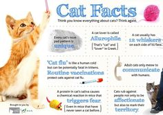 CAt FActs and like OMG! get some yourself some pawtastic adorable cat shirts, cat socks, and other cat apparel by tapping the pin! Pretty Cats, Beautiful Cats, Crazy Cat Lady, Crazy Cats, Cat Facts Text, Cat In Heat, Cat Nose, Mean Cat, Cat Info