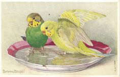 "Lot of 6 Parakeet Vintage Valentine's ""Lovebird"" Postcards 
