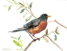 American Robin original watercolor painting 9 X 12 by ORIGINALONLY, $26.00