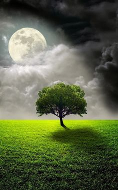 ~~The Supermoon and Lone Tree by Nasser Osman~~