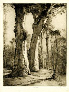 Henri Benedictus Van Raalte, Low light, Gnarled trunks of tall trees in wood, softly lit. 1921 Drypoint, printed in brown ink on oriental tissue