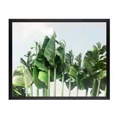 Pottery Barn Tulum Banana Leaves Framed Print by Jane Wilder (288.130 COP) ❤ liked on Polyvore featuring home, home decor, wall art, white easel, white wall art, white home decor, wall mounted easel and pottery barn wall art