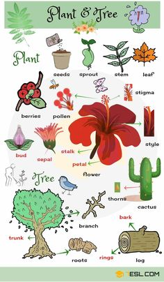Plant and Flower Vocabulary in English – ESLBuzz Learning English Plant and Flower Vocabulary in English – ESL Buzz Learn English Grammar, English Vocabulary Words, English Idioms, Learn English Words, English Language Learning, English Writing, English Study, Teaching English, Vocabulary List