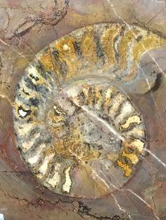 Sarah J. Loecker : Naturkundemuseum visit- finding inspiration in (pr. History Museum, Something Beautiful, Wonders Of The World, Art Supplies, Drawing, Nature, Painting, Inspiration, Watercolor Painting