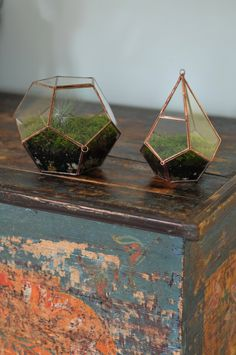 love these mini terrariums