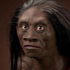 Homo floresiensis female based on skeletal remains LB1.  The date of H. floresiensis is revised.
