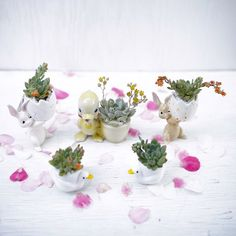 We took super cute vintage critter egg holders and turned them into even cuter succulent arrangements for Easter. Arrangements by Dalla Vita.