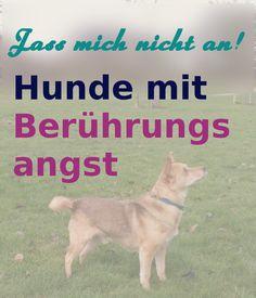 Hund lässt sich nicht anfassen