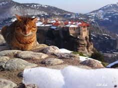My dream has been to visit Meteora with the area covered in snow ever since we came here 2 years ago for the 1st time. We kind of missed the snow that fell last week but there are spots where it remains. This cat posed for us as we enjoyed photographing t