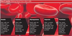 Major steps in creating blood stem cells