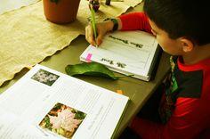 Apologia Botany - Lesson 1