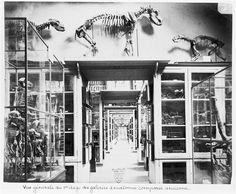 vue générale du 1er étage des galeries d'anatomie comparée, paris 1880.