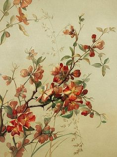 Study of Japanese Quince by Madeline Flory. 19th century