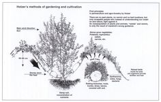 Sepp Holtzer's Method of Gardening & Cultivation. Hugelkultur: Composting Whole Trees With Ease Permaculture Research Institute Permaculture Design, Permaculture Courses, Permaculture Principles, Permaculture Garden, Backyard Farming, Organic Gardening, Gardening Tips, Vegetable Gardening, Wilde Hilde
