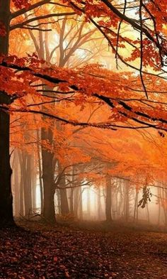 Fall Colors   Autumn Beauty