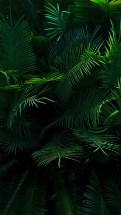 Iphone Wallpaper Check more at Iphone Wallpaper Tropical, Beste Iphone Wallpaper, Ios 7 Wallpaper, Green Wallpaper, Flower Wallpaper, Nature Wallpaper, Wallpaper Backgrounds, Vegetal Concept, Plant Aesthetic