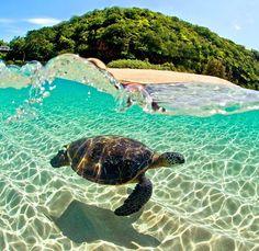 #vacation #spring #turtle #island