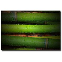 'Bamboo Drops' by Philippe Sainte-Laudy Photographic Print on Canvas