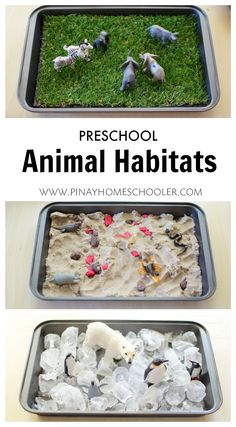 Animal habitats with preschool sensory materials - . - Animal habitats with sensory materials in preschool age – … – Cook – - Montessori Activities, Preschool Activities, Animal Activities For Kids, Montessori Homeschool, Montessori Toddler, Montessori Materials, Preschool Learning Centers, Preschool Animal Crafts, Science Area Preschool