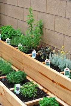 Wonderful Small Garden For Small Backyard Ideas Just for You - Backyard Landscaping Small Herb Gardens, Backyard Vegetable Gardens, Herbs Garden, Garden Steps, Diy Herb Garden, Indoor Garden, Easy Garden, Patio Herb Gardens, Outdoor Gardens