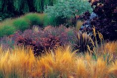 Combining ornamental grasses can give your landscape a very naturalized look. Pictured from front are Mexican feather grass, purple fountain grass, lavender, the pink-beige tufted oriental fountain grass and miscanthus. The deep burgundy spiked blades in the right foreground belong to the annual 'Baby Bronze' New Zealand flax.