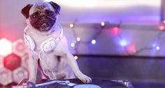Cute Pictures: Animals at the Office Party - Cute - Stylist Magazine