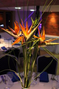 Beautiful bird of paradise simple but stunning can set any room off