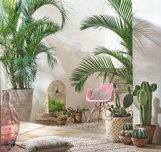 Groene oase met cactussen voor in huis