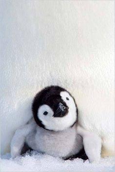 Hello. . . lil' penguin <3