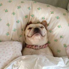 #BarbaraDUrso Barbara D'Urso: Che bello addormentarsi con il sorriso sulle labbra! ⭐️⭐️⭐️ #sognare #selodesideriaccade #goodnight #buonanotte #pictoftheday #love #dog #dormire
