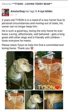2/18/18 PLEASE HELP TYSON‼️ HE'S DEVASTATED AND NEEDS LOVE AND CARE IN A NEW FOREVER❤️‼️ /IJ3